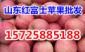 精品红星苹果批发