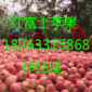 2016最新97资源中文字幕苹果价格